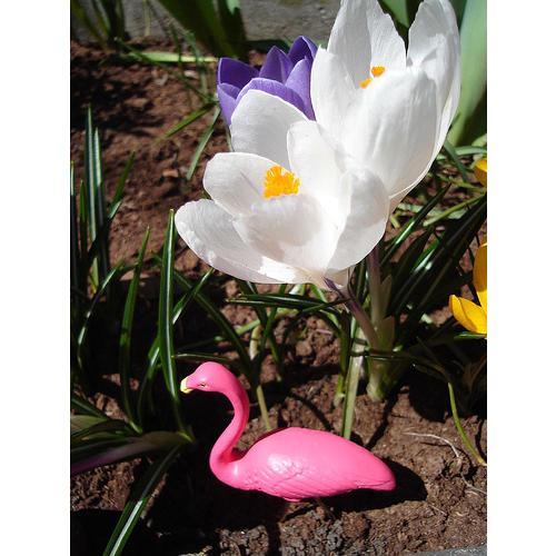 Normal_gradina_flamingo_flickr