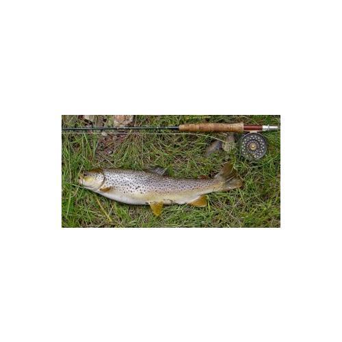 Normal_trout_simonh_fotopedia_cc