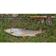 Thumb_trout_simonh_fotopedia_cc
