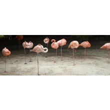 Thumb_106_flamingo