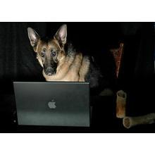 Thumb_dog_pc
