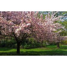Thumb_normal_a_taste_of_spring_colors_with_pretty_trees_in_flower_-2