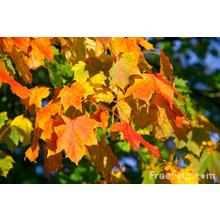 Thumb_autumn