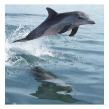 Thumb_delfin