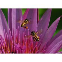Thumb_bees