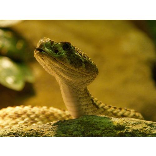 Normal_snake-london_zoo-reptile