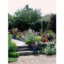 Thumb_summer_garden-flickr