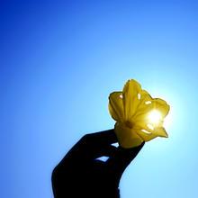 Thumb_sun-hand