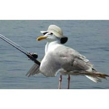 Thumb_birdfish