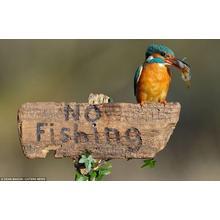 Thumb_no_fishing.jpg