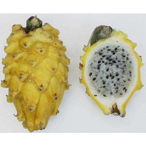Normal_yellow_pitaya