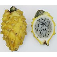 Thumb_yellow_pitaya
