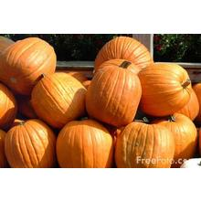 Thumb_pumpkins_web_freefoto