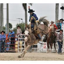 Thumb_rodeo