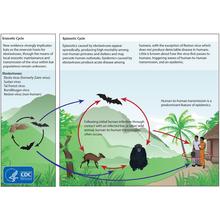 Thumb_ebolacycle
