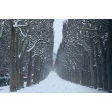 Thumb_snow1