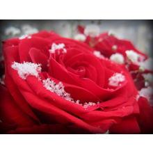 Thumb_frozen_love_by_lovergurl-d511eo2