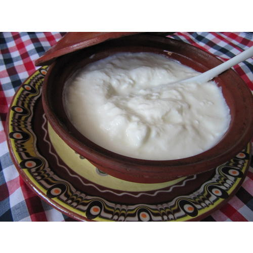 Normal_bulgarian_yogurt.jpg