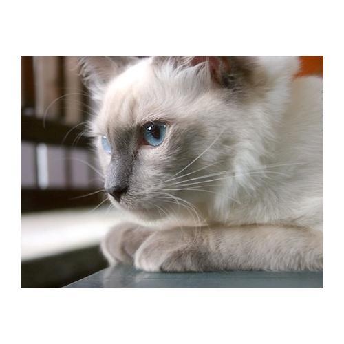 Normal_cat_digilander_libero_it