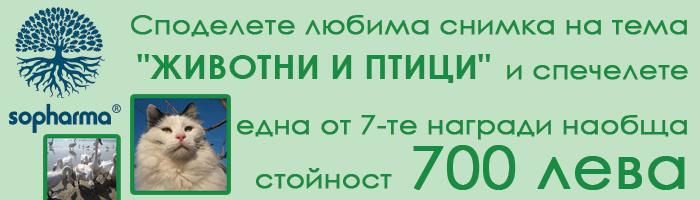Normal_700x200nov