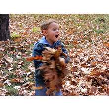 Thumb_fall_in_north_park-026
