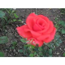 Thumb_28_06_14_011