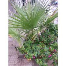 Thumb_20140926_145627