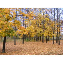 Thumb_fall_in_north_park-010