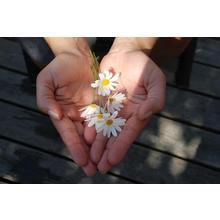 Thumb_flower-hands-giving-give-gift-take-1_1403818658